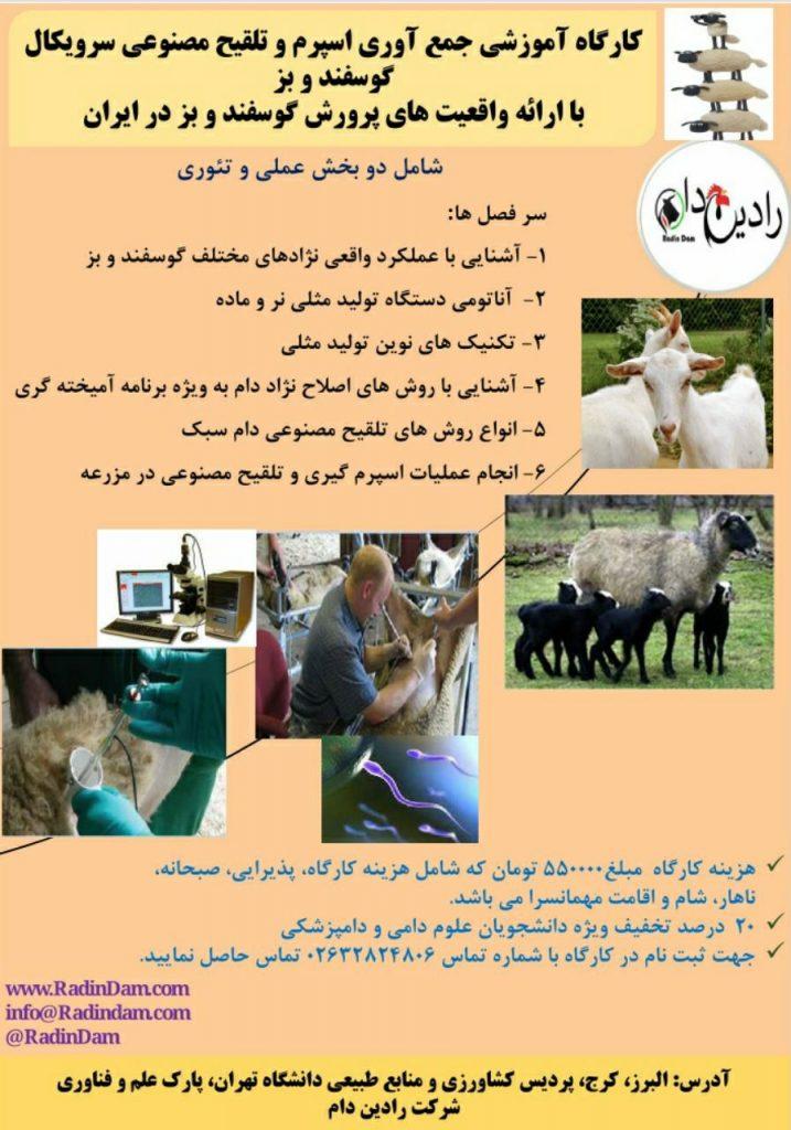 کارگاه آموزشی جمع آوری اسپرم و تلقیح مصنوعی سرویکال گوسفند و بز با ارائه واقعیت های پرورش گوسفند و بز در ایران